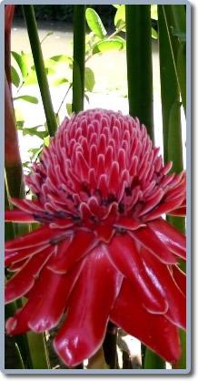 fleurs tropicales sonya972. Black Bedroom Furniture Sets. Home Design Ideas